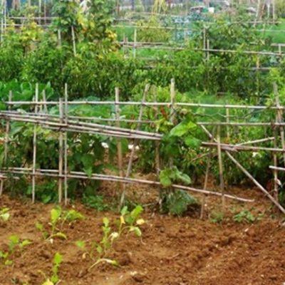 Effetto crisi, triplicano gli orti domestici