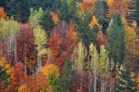 Bentornato autunno: ecco come sarà la nuova stagione
