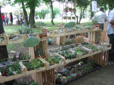 Orto botanico, il giardino e non solo