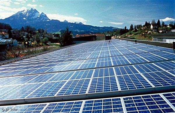 """Brindisi, la strage degli """"ulivi"""": distrutti 6500 alberi per far posto a impianti fotovoltaici"""