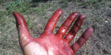 """La petizione: """"Sul petrolio in Basilicata devono decidere i lucani"""""""