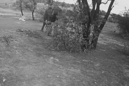 Video insoliti, guardate che cosa fa questo elefante