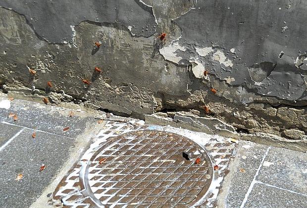 Napoli, una colletta per eliminare le blatte