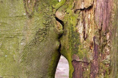 Un amore di Natura