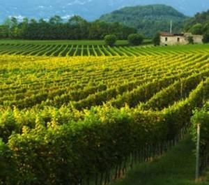 Vuoi diventare agricoltore? Lo Stato mette in vendita i suoi terreni: anche in Puglia e Basilicata