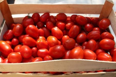 Le follie di Bruxelles: regolare il pomodoro San Marzano prodotto in Belgio