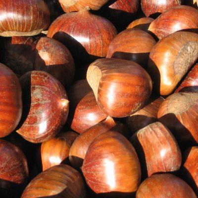 SAPERE I SAPORI, la castagna: da cibo dei poveri a prelibatezza per palati raffinati
