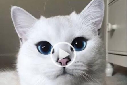 Gli occhi blu dei gatti…