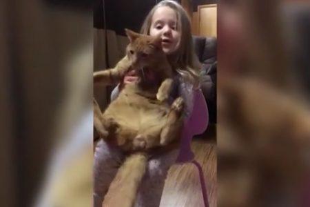 Il gatto e la bambina, giochi pericolosi