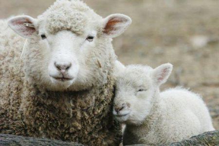 Pasqua, animalisti in campo: ecco un menù vegano per il pranzo delle feste