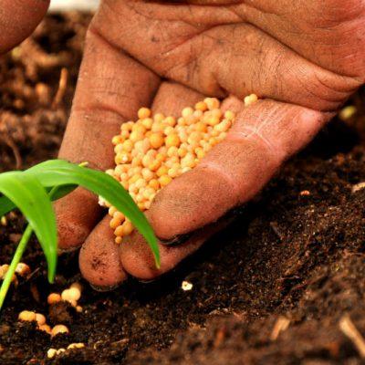 Campania, presentato il Piano di Sviluppo Rurale. Mastrocinque (Cia): Ora snellire le procedure per le Pmi