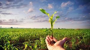 CHE SUD CHE FA / AGRICOLTURA E GIOVANI: Il boom delle produzioni biologiche – Tanta ricerca e innovazione in colture ed alimenti