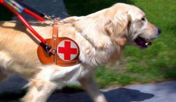 Disabilità, quando il cane guida non può entrare in albergo