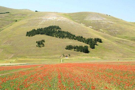 ITALIA: FRENANO GLI INCENTIVI, CALANO LE RINNOVABILI – OBIETTIVI COP21 A RISCHIO