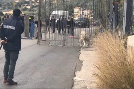 Video choc, una tigre scappa dal circo e passeggia per le vie di Monreale