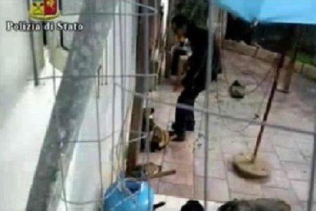 Orrore a Lecce, cane seviziato ed ucciso: raccolta di fondi per una taglia