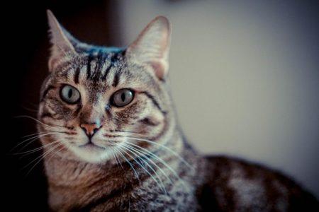 Succede al Nord. Condannato a Bergamo il killer dei gatti