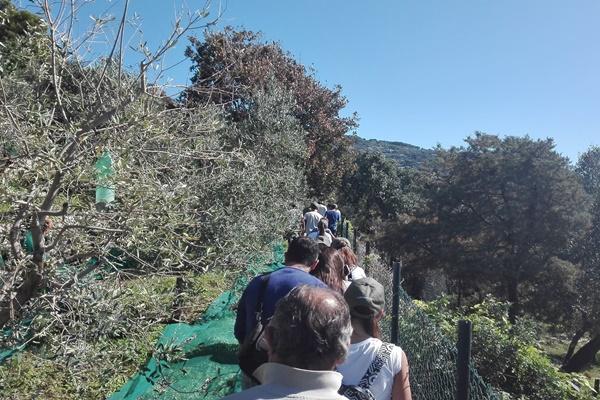 L'oro di Capri, vieni a passeggiare fra gli ulivi dell'isola