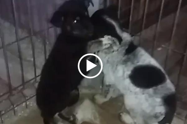 Di che cosa hanno paura questi cuccioli…