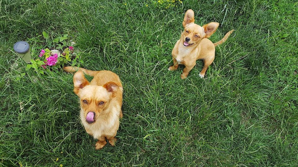 foto-free-royalty-cani-1.jpeg