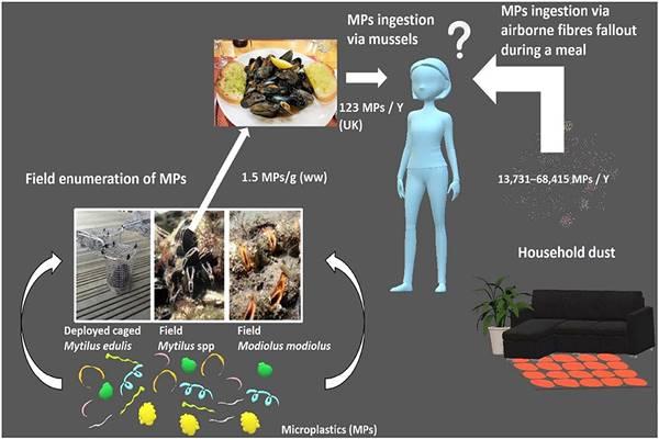 Clamoroso, mangiano 100 microplastiche a pasto