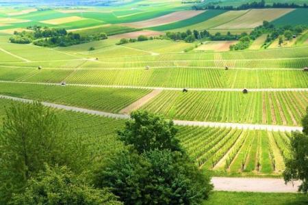 L'Italia è ora il Paese più green d'Europa