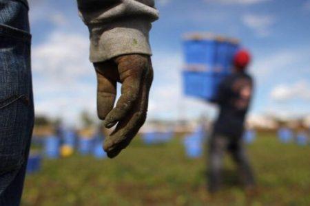 Tragedia sul lavoro a Foggia, l'accusa dei sindacati: colpa del caporalato