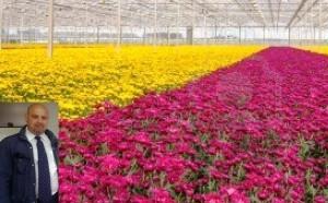 La battaglia dei crisantemi in Campania