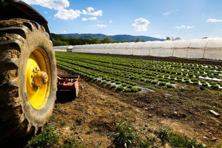 Otto italiani su dieci vorrebbero un figlio impegnato in agricoltura