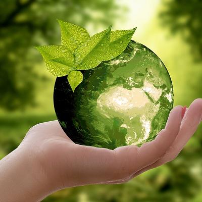 """Ambiente, Patruno (Assoimpredia): """"Solo 60 Comuni su 8mila hanno il regolamento del Verde: si intervenga subito per evitare gli alberi-killer"""""""