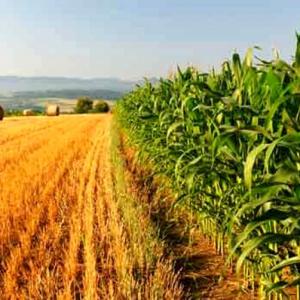 Agricoltura, istituito l'Osservatorio regionale per lo sviluppo del settore