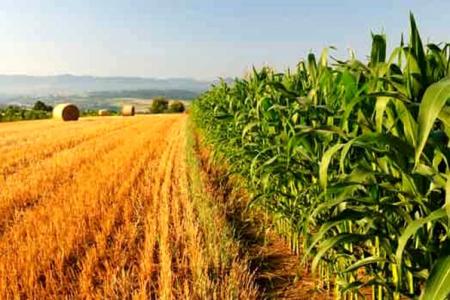Morti bianche, agricoltura ad alto rischio: +39%