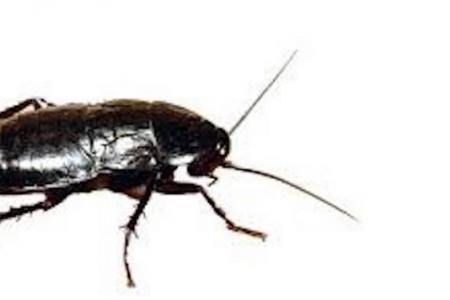 Napoli, la denuncia dei Verdi: dopo le formiche, in ospedale arrivano le blatte