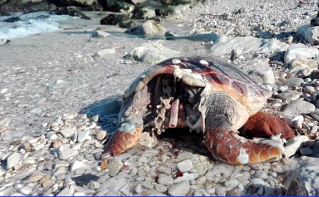 La strage delle tartarughe marine sulle spiagge pugliesi