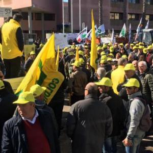 """Allarme Xylella, la rabbia degli olivicoltori: """"E' disastro colposo"""""""