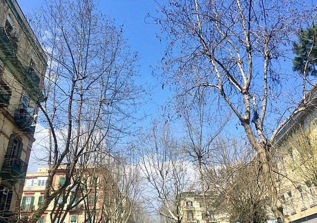 Vomero: la primavera è arrivata, la potatura degli alberi no!