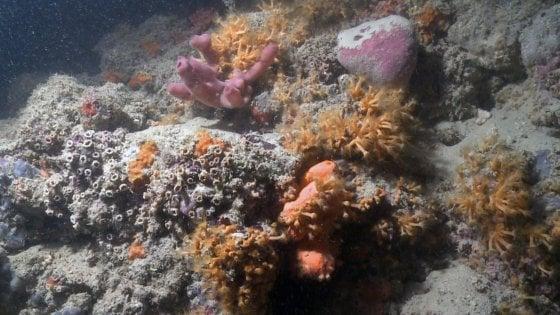 Il video spettacolare della barriera corallina al largo di Monopoli