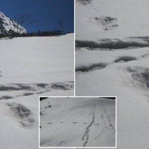 Clamoroso, l'esercito indiano sostiene di aver trovato le impronte dello Yeti