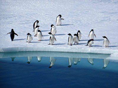Un drone riprende i pinguini che vivono in Antartide: un video da non perdere