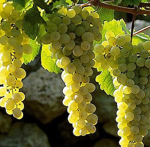 Enoturismo, partnership tra Campania e Canada nella capitale europea del vino