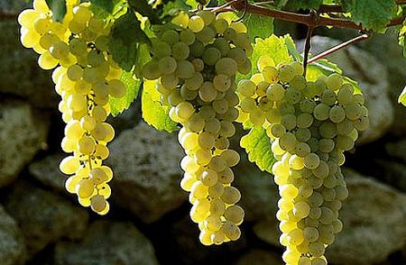 Falanghina European Wine City 2019. Si chiude il sipario: testimone alla Spagna