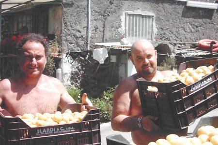 La nuova battaglia per le albicocche del Vesuvio