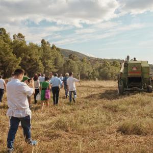 Campi del Cilento, torna l'iniziativa della Molini Pizzuti dedicata ai grani antichi