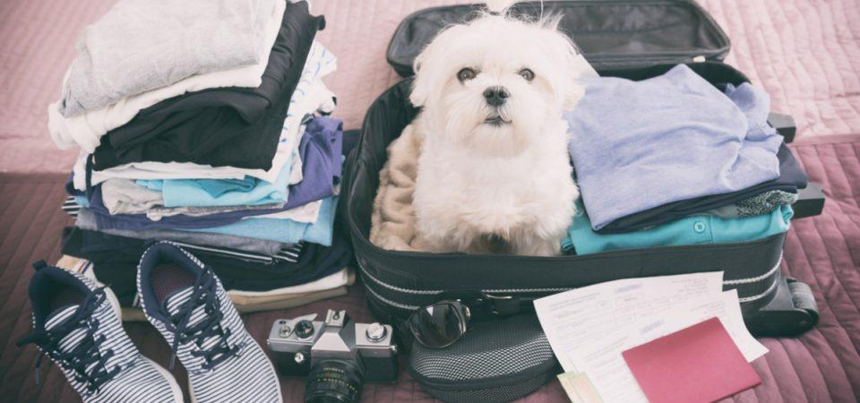 Vacanze. Un italiano su cinque in viaggio con un animale