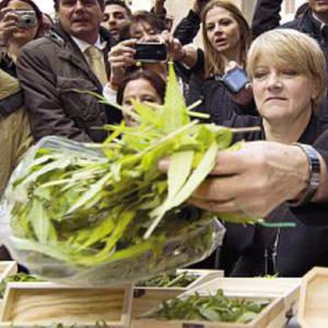 Coltivava marijuana sul terrazzo, Rita Bernardini chiede l'arresto. Ma viene solo denunciata