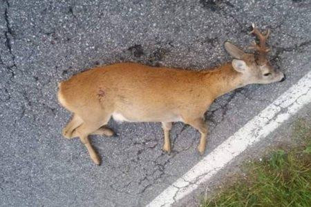 Regno unito, lo studio shock: in 50 anni sparito il 60% degli animali selvatici