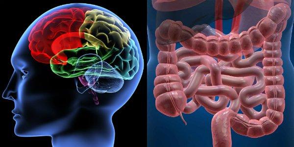 Clamoroso: una ricerca americana dimostra che più si è grassi più si riduce il cervello