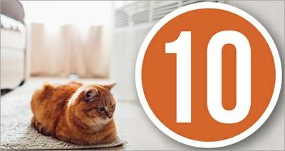 Arriva il freddo, dieci buone regole per evitare sprechi con il riscaldamento