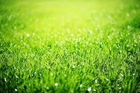 Green: al via il primo master per manager della tutela ambientale